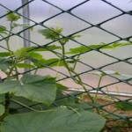 Садовая сетка